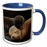 3dRose Danita Delimont - Baby Animals - Galapagos Sea lion Mother and new pup, Galapagos, Ecuador. - 15oz Two-Tone Blue Mug (mug_228917_11)