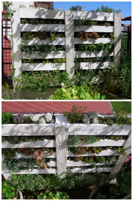 Upcycled Pallet Into Vertical Garden