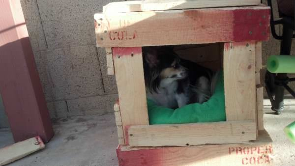 IMG 20130713 183914 503 600x338 Pallet Dog House in diy pallet ideas  with pallet House Doghouse DIY
