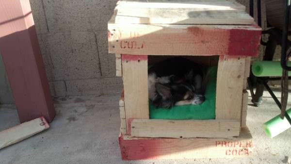 IMG 20130713 183942 373 600x338 Pallet Dog House in diy pallet ideas  with pallet House Doghouse DIY