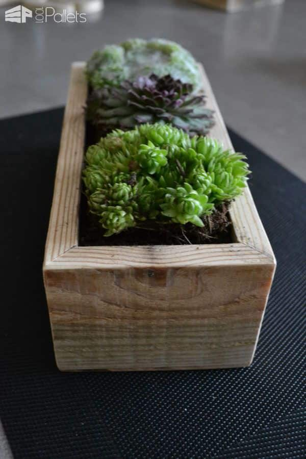 Small Succulents Planters / Petite Décorations De Table Pallet Home Accessories