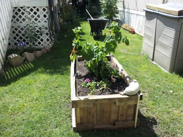 20130626 113206 600x450 Pallet raised planter in pallet garden  with Planter pallet Garden