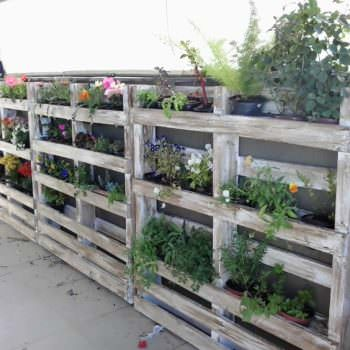 Pallets Wall Planter In My Garden