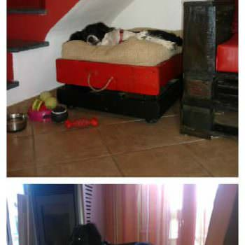 Cuccia Vintage in Pallets / Dog Bed With Pallets