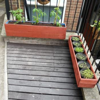 Tomatoes Pallet Planter