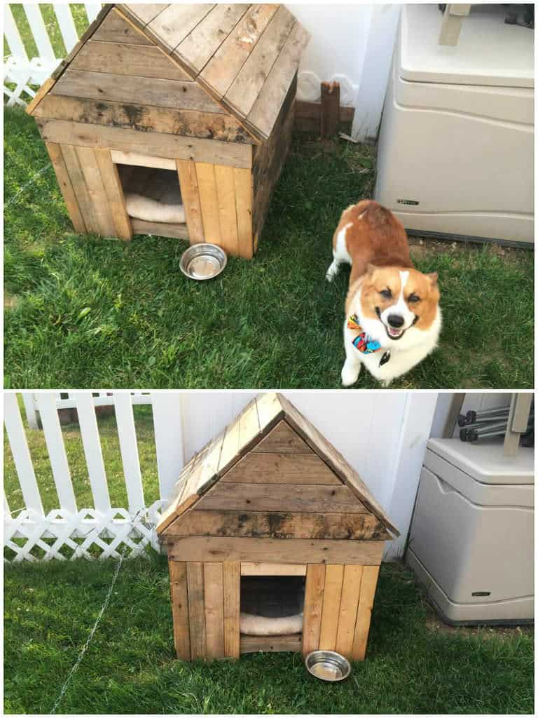 Rhino S New Dog House From Recycled Pallets 1001 Pallets