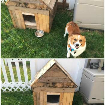 Rhino's new Dog House…Recycled pallet idea