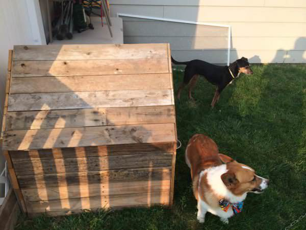 Rhino's New Dog House From Recycled Pallets Animal Pallet Houses & Pallet Supplies