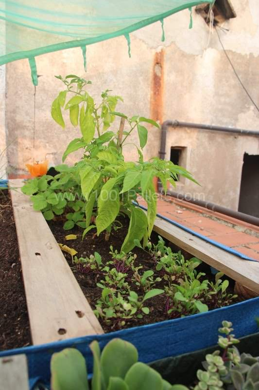 Vegetable & Herbs Garden Planter Made From Wooden Pallet Pallet Planters & Pallet Compost