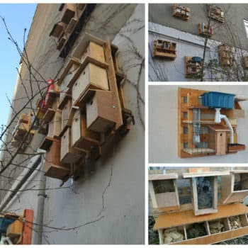 Pallet Used For Assembling Objects For Birds, Insects, Bats & Butterflies