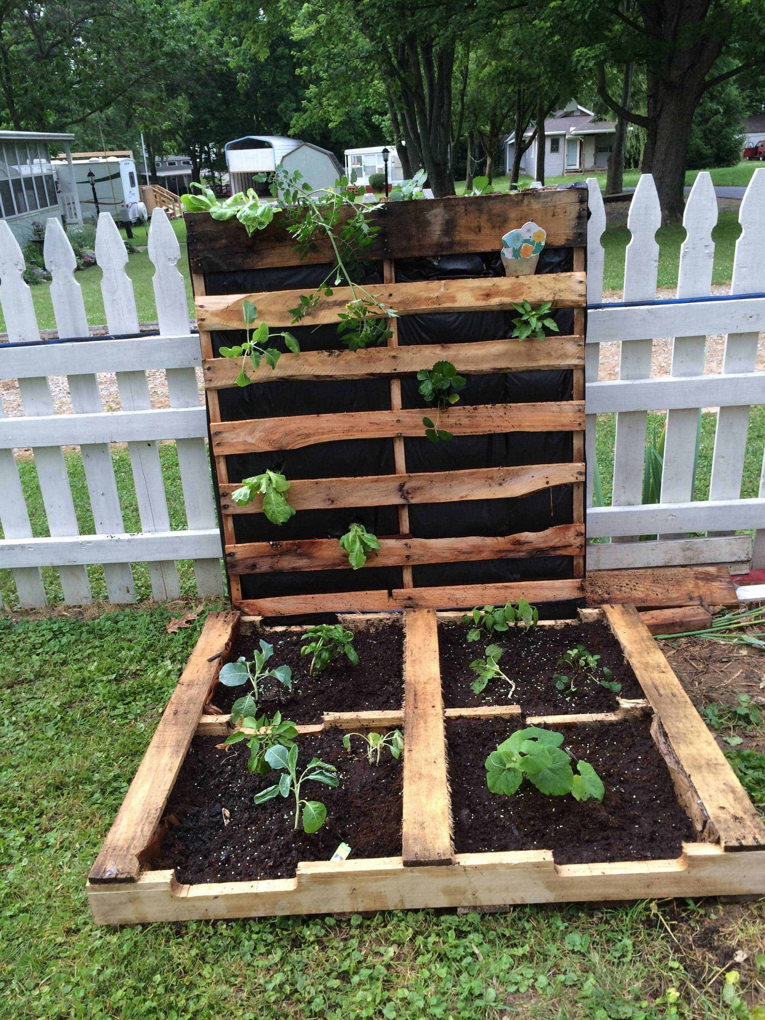 How to make your first pallet garden 1001 pallets for Pallet veggie garden