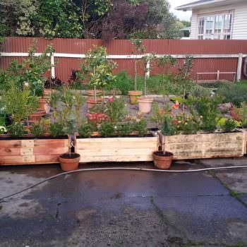 Planter Boxes For Hedging