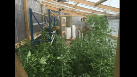 40$ Pallet Greenhouse Timelapse Video