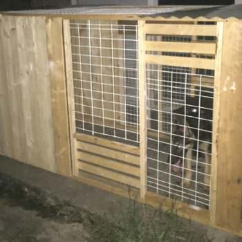 Custom Made Collapsible Dog Kennels