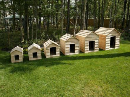 Weather Resistant House for Your Furry Buddy