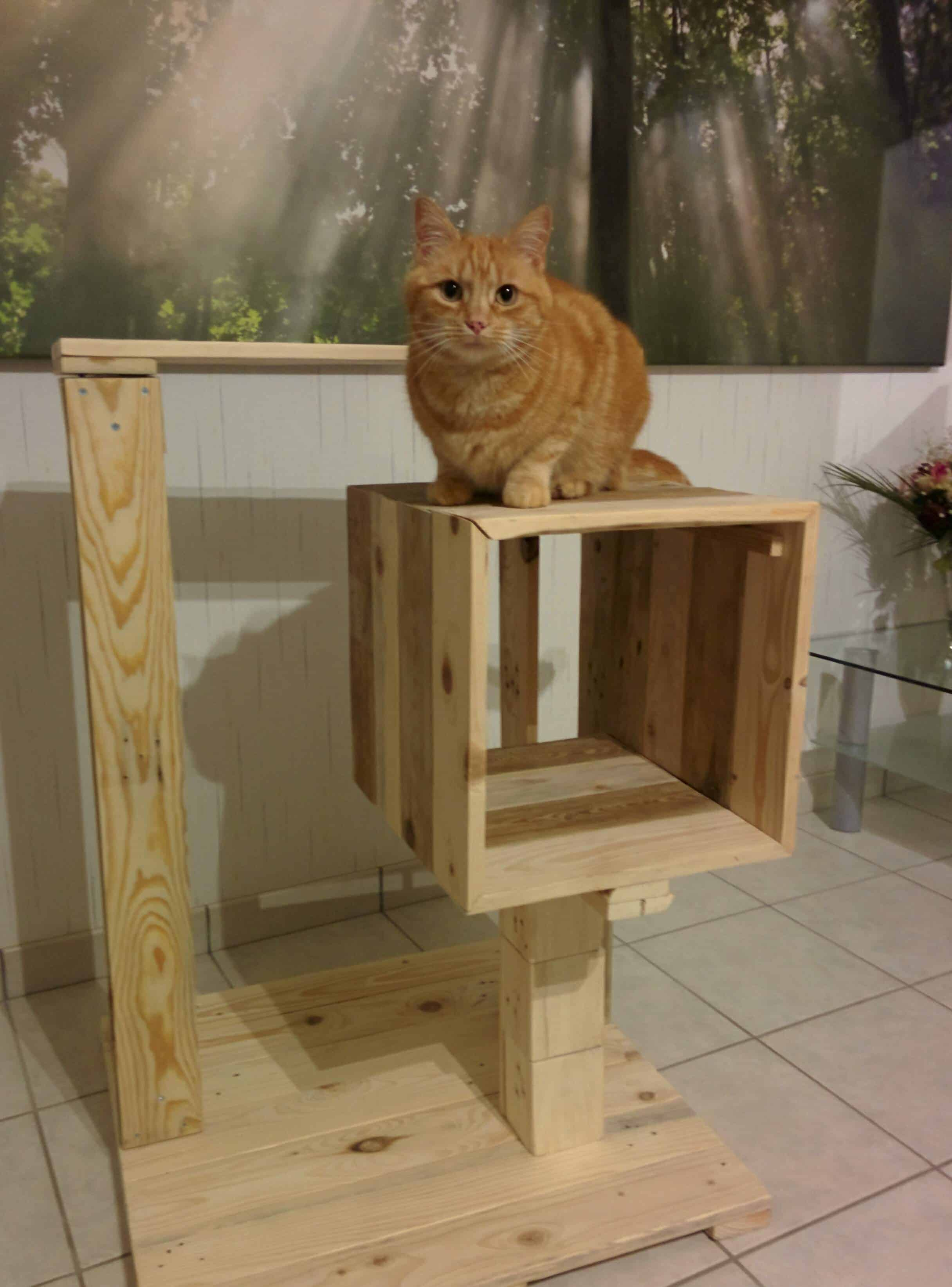 petite pallet cat tree arbre chat 1001 pallets. Black Bedroom Furniture Sets. Home Design Ideas