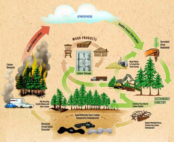 How Recycling Wood Pallets Helps Save the Planet