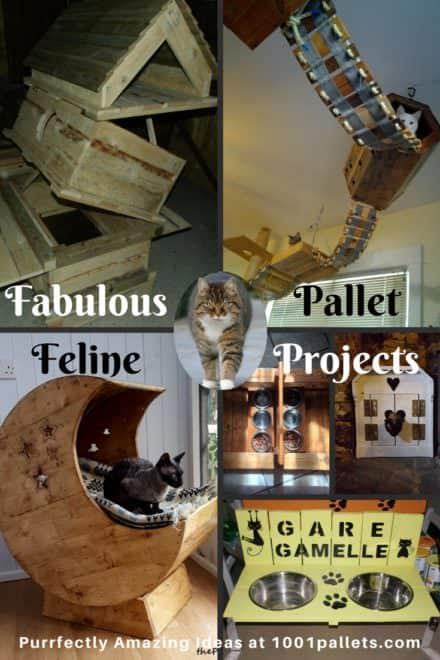 Our Cats Deserve Awesome Cat Pallet Projects: Here's 10 Amazing Ideas For Them!