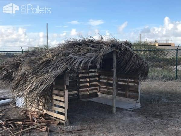 Creative use of local materials, including palm fronds for the roof of this pallet animal shelter can save you a lot of money!