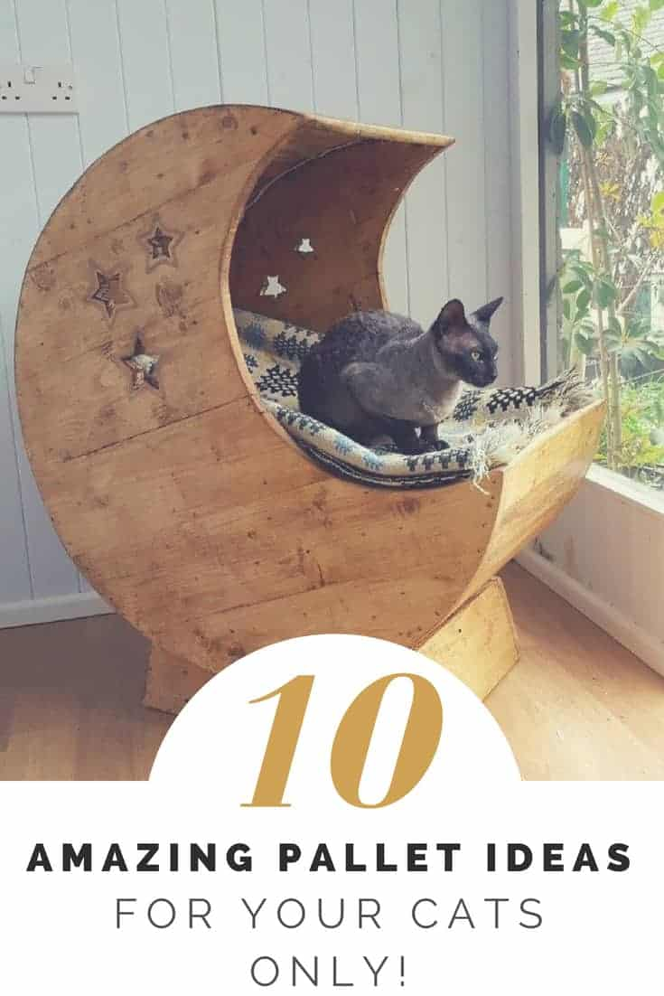 Brilliant Cat Pallet Projects Here Are 10 Amazing Ideas For Them Pabps2019 Chair Design Images Pabps2019Com