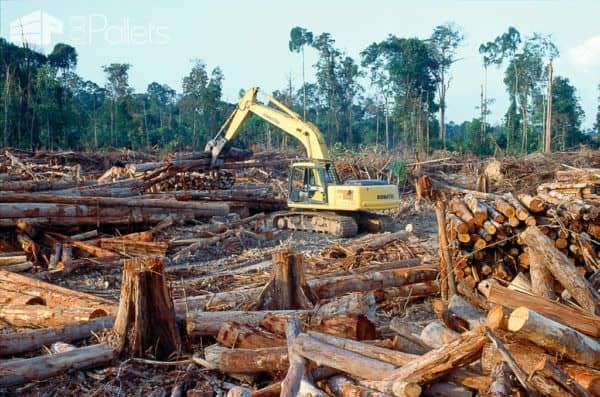 It's easy to forget the devastation that happens daily. Reclaimed Wood reduces the carbon footprint.