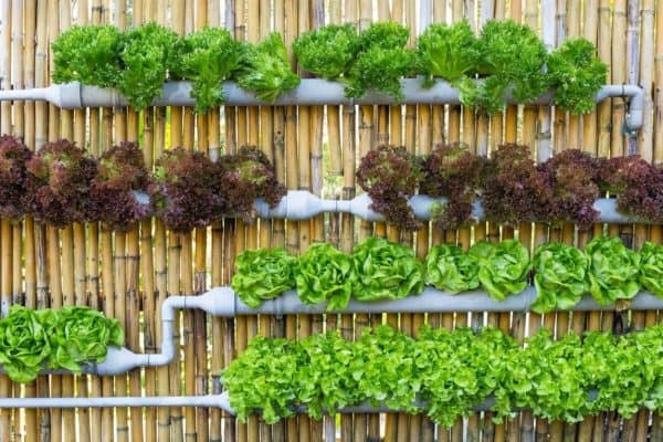 What Can I Grow in a Vertical Pallet Garden? Pallet Planters & Compost Bins