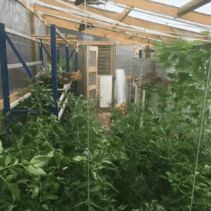 1001pallets.com-serre-greenhouse3