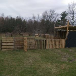 1001pallets.com-horse-pasture-and-shelter