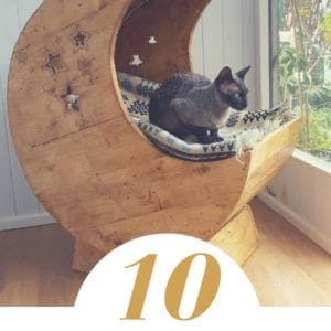 1001pallets.com-our-cats-deserve-awesome-cat-pallet-projects-here-s-10-amazing-ideas-for-them-01