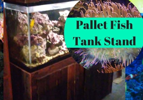 1001pallets.com-pallet-fish-tank-stand-has-decorative-knot-hood-05