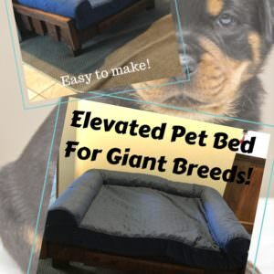 1001pallets.com-raised-pallet-dog-bed-keeps-sadie-comfy-01