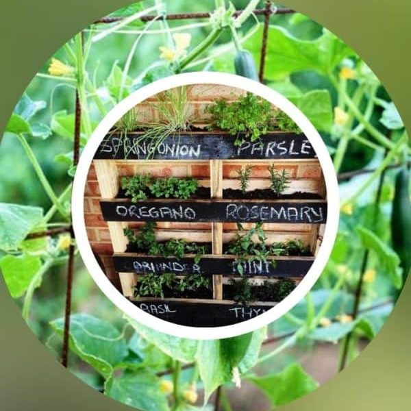 What can I grow in a vertical pallet garden